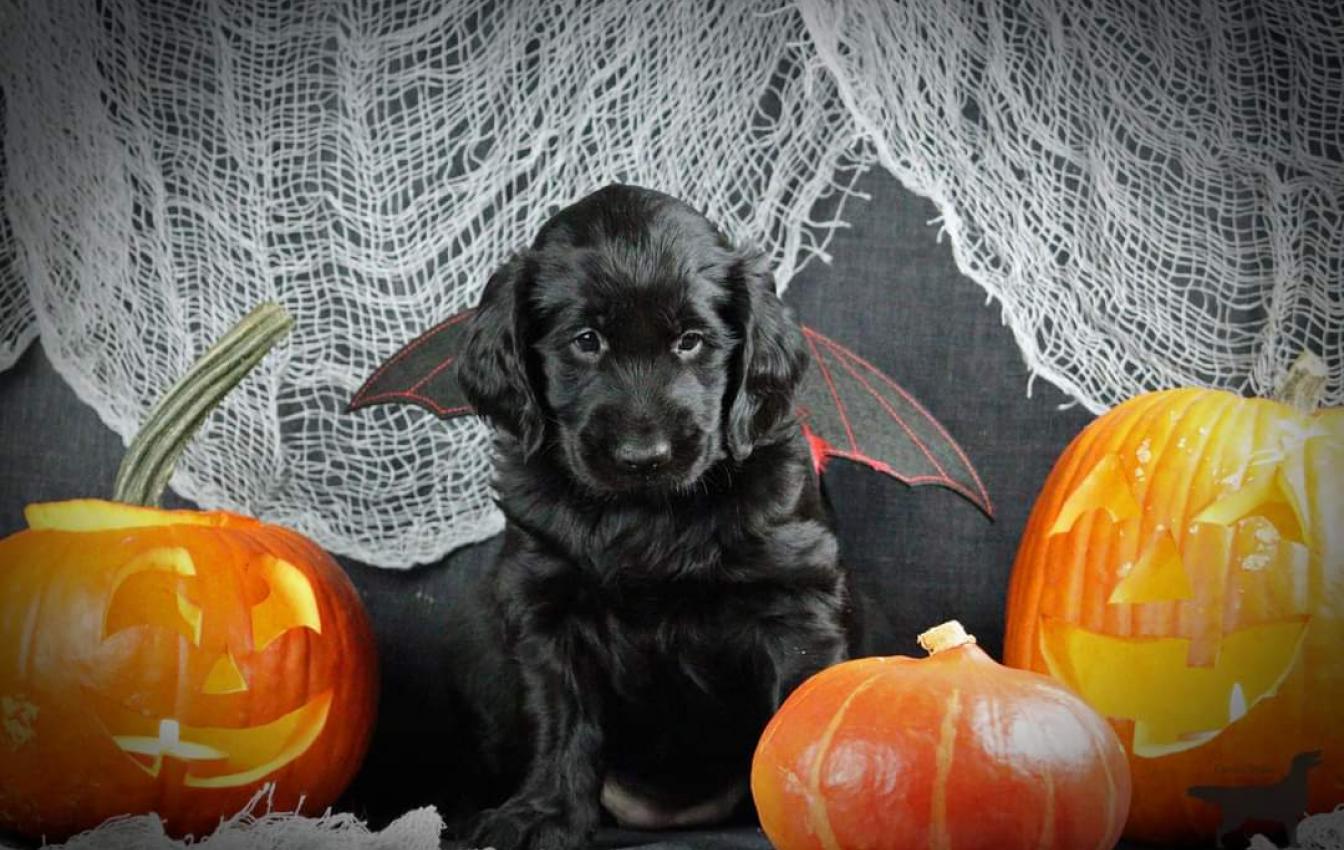 Izzy met Halloween